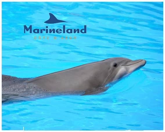 Cas client Marineland